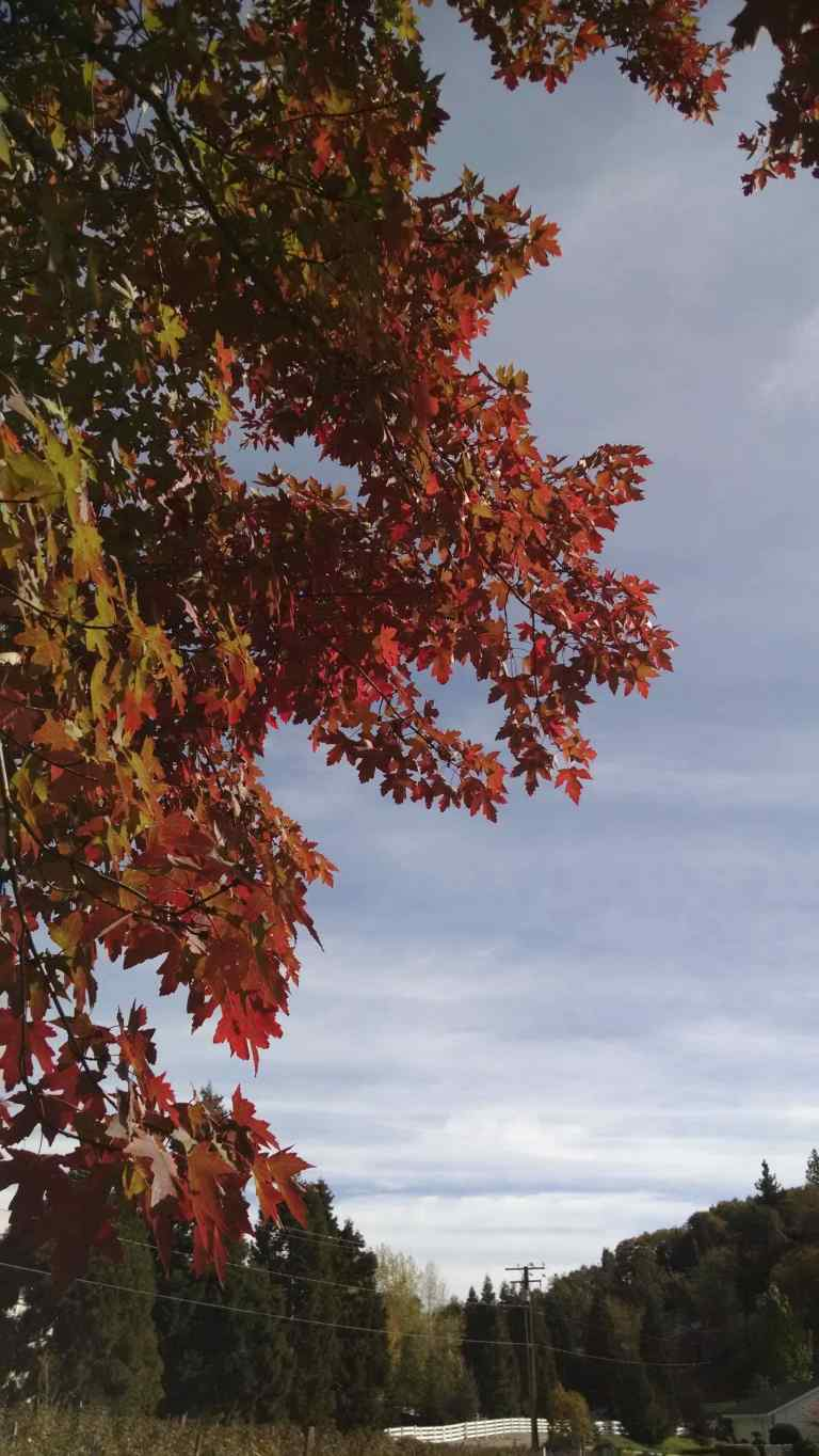 20_2014-10-26 15.23.46_lr